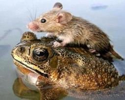 altruismo-animal